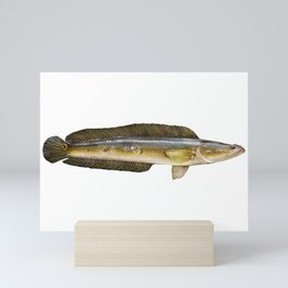 Bullseye Snakehead Mini Art Print