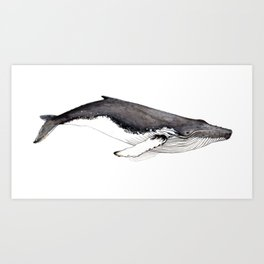 Humpback whale for whale lovers Art Print