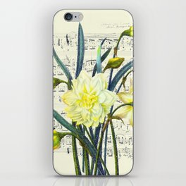 Daffodil Spring Song iPhone Skin