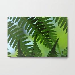 Dicksonia antarctica – the soft tree fern Metal Print