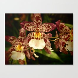 Orchids IV Canvas Print