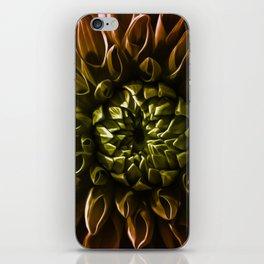Dahlia multicolor iPhone Skin