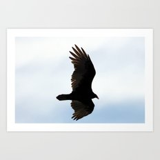 Turkey Vulture in Flight Art Print