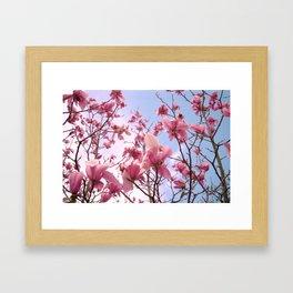 Magnolia's Framed Art Print