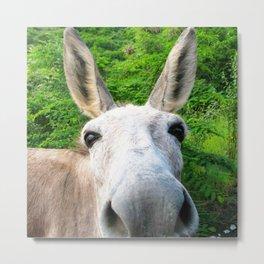 Watercolor Wild Donkey 01, St John, USVI, Hi! Metal Print