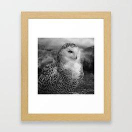 Snowy Owl - B & W Framed Art Print