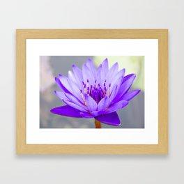 Blue Lotus In Bloom Framed Art Print