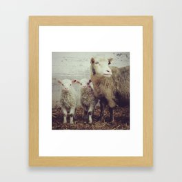 Sheep #1 Framed Art Print