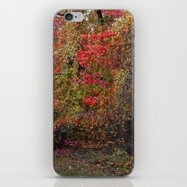 Evocative Autumn iPhone Skin
