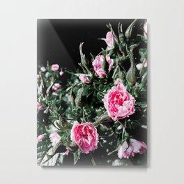 Ruffled Roses Metal Print