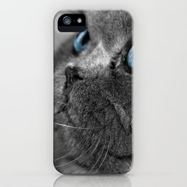 Grey Persian Cat with Blue Eyes iPhone Case