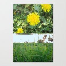 Grass Dandy Canvas Print