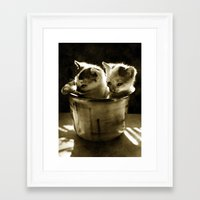 kittens Framed Art Prints featuring Kittens by Northern Light Images