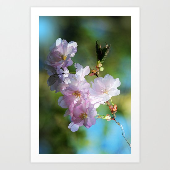 Pretty Pink Blossoms Art Print