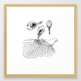 Bird Skull Framed Art Print