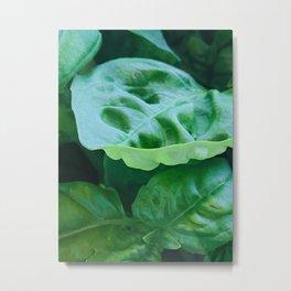 Green Basil Metal Print