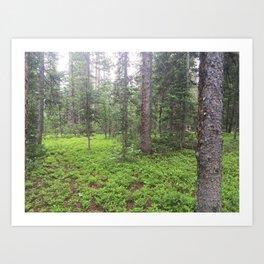 Colorado Forests Art Print
