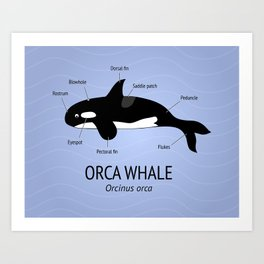 Whimsical Scientific Illustration of an Orca Whale Art Print