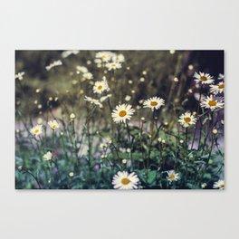 Daisy II Canvas Print