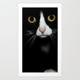 cat - are you looking at me? Art Print