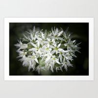 Wild Garlic Art Print