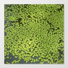 little water leafs II Canvas Print