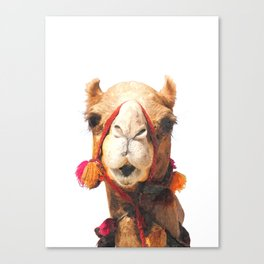 Camel Portrait Canvas Print
