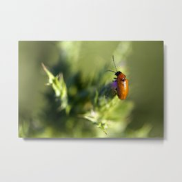 Red Bug Metal Print