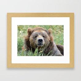 Brown kodiak bear Framed Art Print