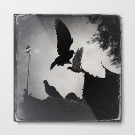 Bangkok Pigeons Metal Print