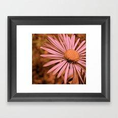 Pink as a Petal Framed Art Print