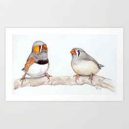 Courting Zebra Finches Art Print