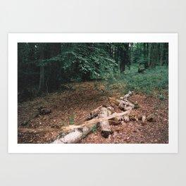 P_05 Art Print