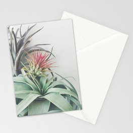 Air Plant Collection II Stationery Cards