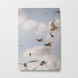 Photo of Seagulls, flying birds on the Island of Texel I, Holland/The Netherlands   Fine Art Colorful Travel Photography    Metal Print