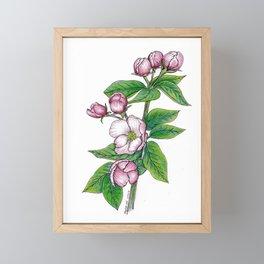 Apple Blossoms, floral art, flower drawing, pink spring flowers on white background Framed Mini Art Print