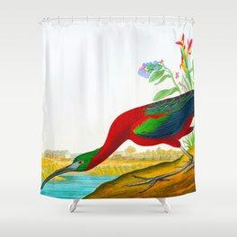 Glossy Ibis Bird Shower Curtain