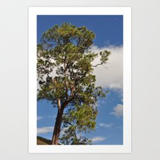 top of the hill Art Print