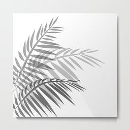 Leaves of palm tree leaves Metal Print