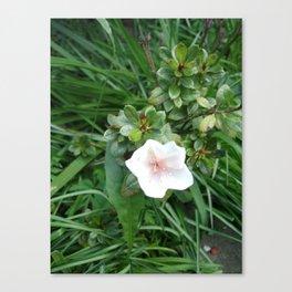 soft pink flower Canvas Print