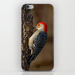 Red-Bellied Woodpecker Drumming iPhone Skin