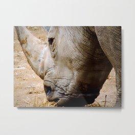 Close Up Rhinos Metal Print