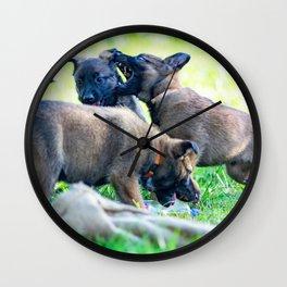 Wild Puppies Herder-Shepherds Wall Clock