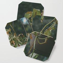 Vining Plant Coaster
