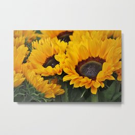 Golden Sunflowers Metal Print