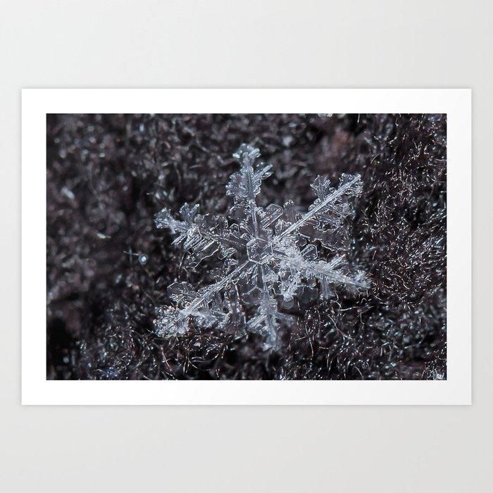 Sowflake Closeup #2 Art Print