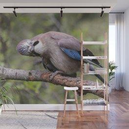 Curious beautiful Jay bird Wall Mural