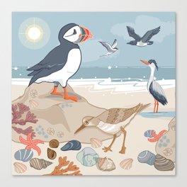 Coastal Birds By The Sea Canvas Print