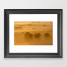 Gold in the Hedgerows Framed Art Print