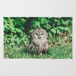 Barred Owl Rug